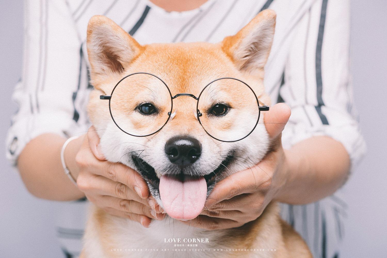 台南寵物寫真 柴犬
