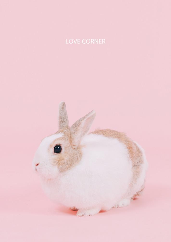 台南寵物寫真 兔子